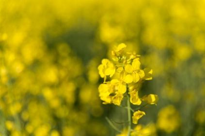 bloemenzee-0477